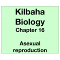 Biology Chapter 16 - Asexual Reproduction